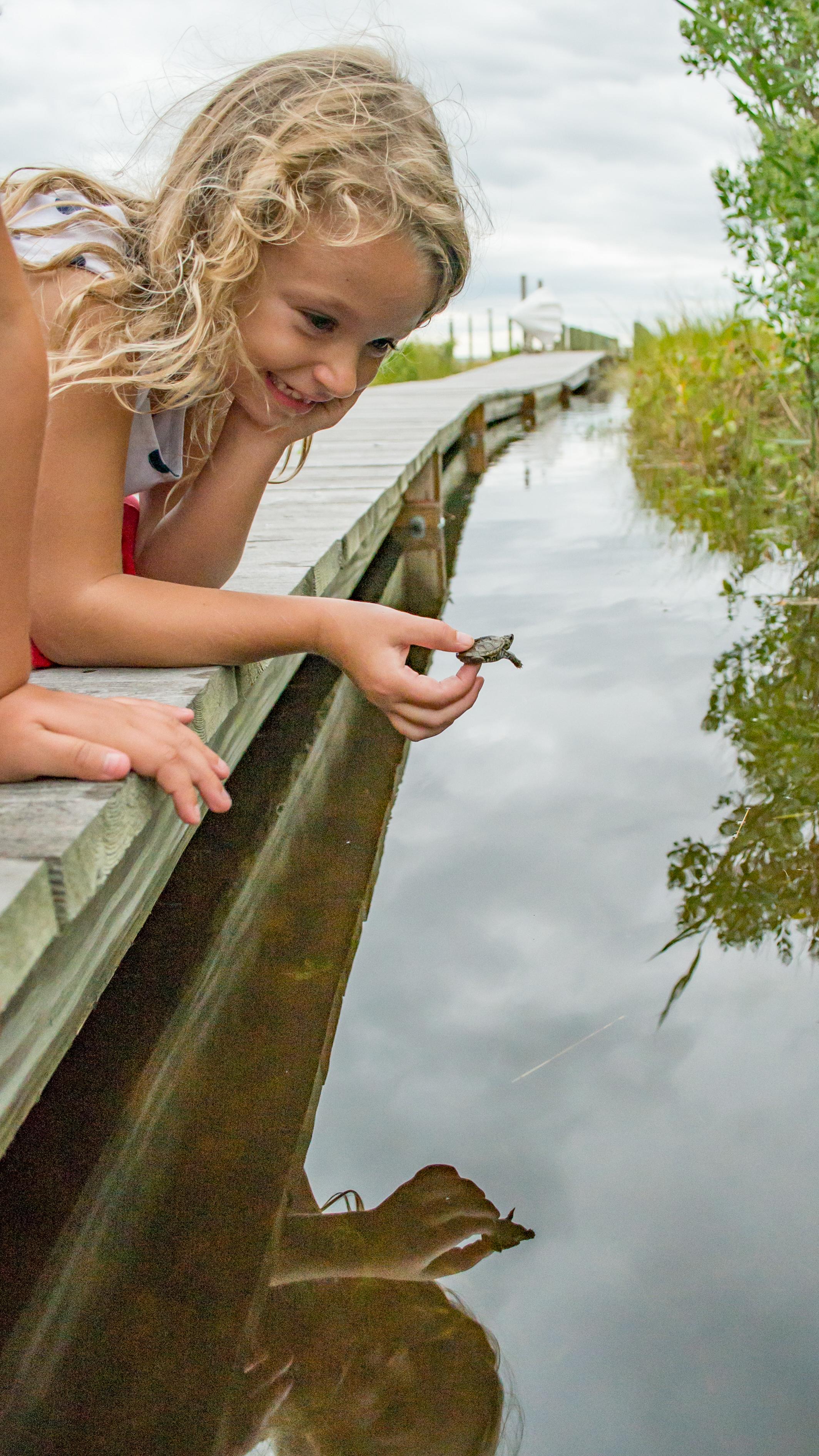 Turtle9616-24.jpg