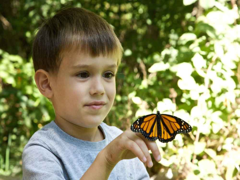Ryan Hagerty, U.S. Fish and Wildlife Service, via Creative Commons.