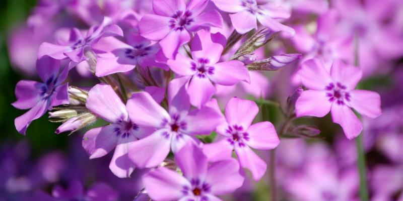 10 Of The Most Stunning Nebraska Wildflowers Send Flowers In