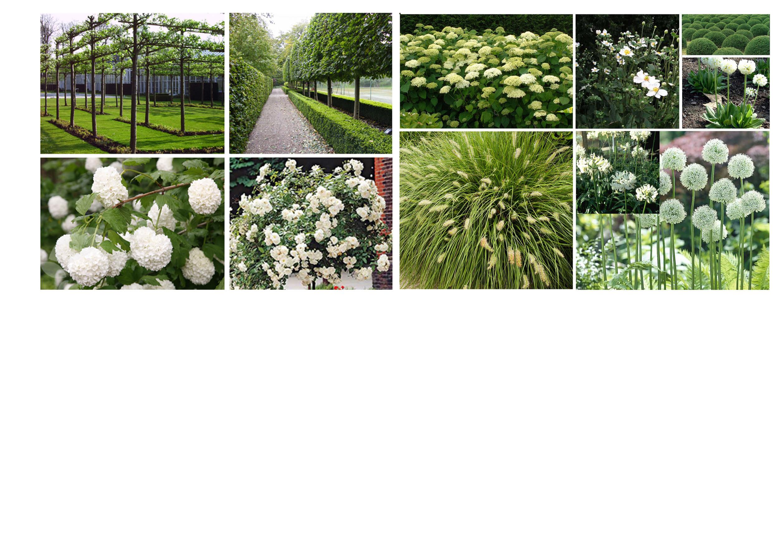 plantplan.jpg