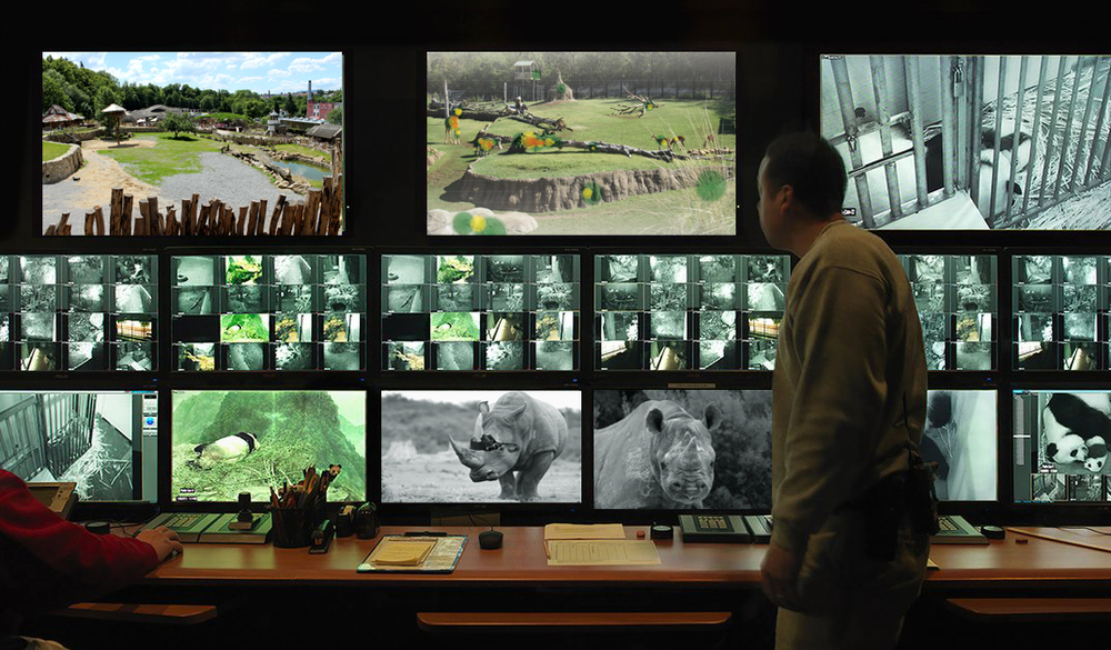 Zoo staff monitor the eye tracker and camera in real-time
