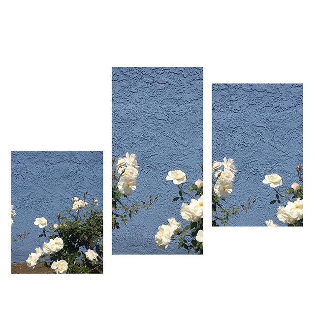 Feeling Like Springtime 🌸