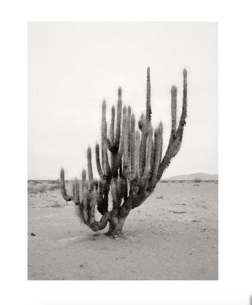 Carly Steinnbrunn -   Cacti, 2014