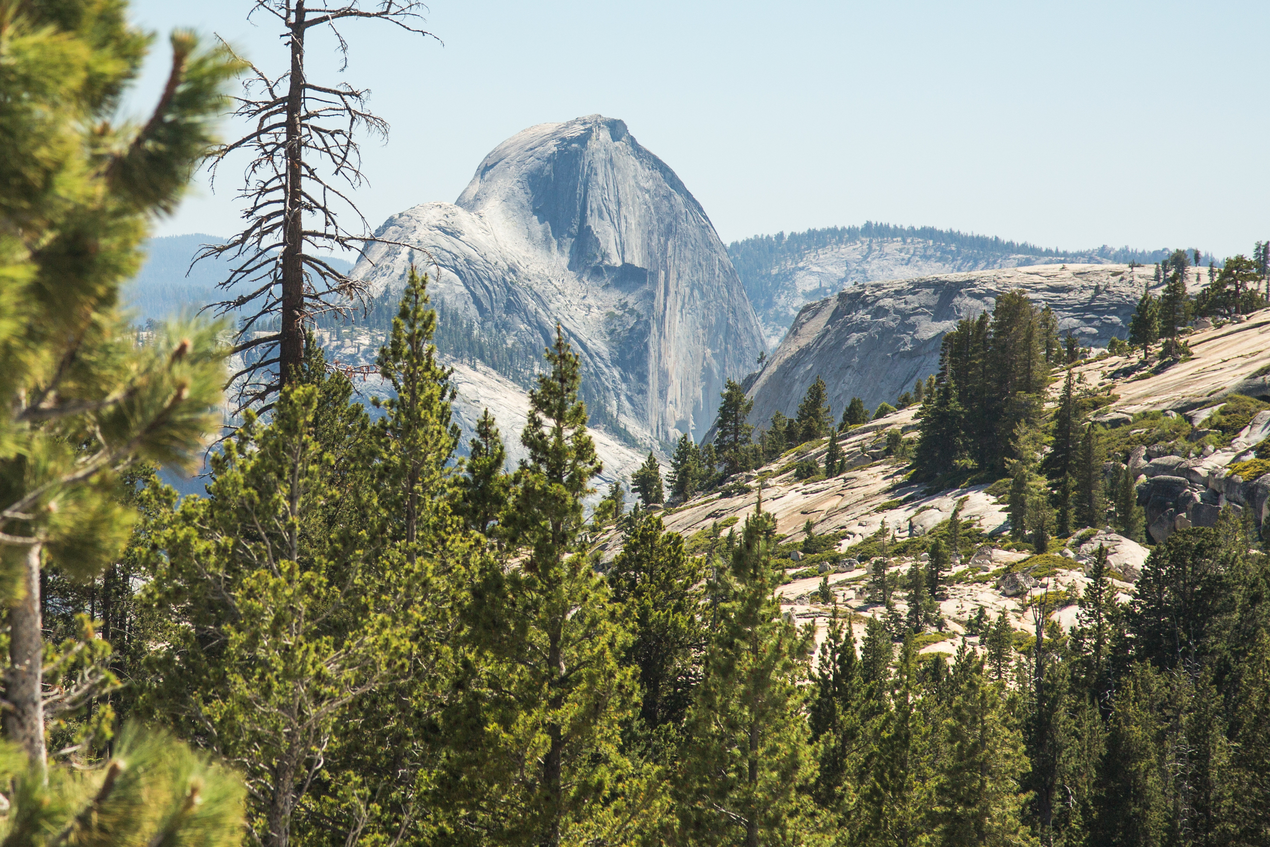 Half Dome peeking up from Yosemite Valley
