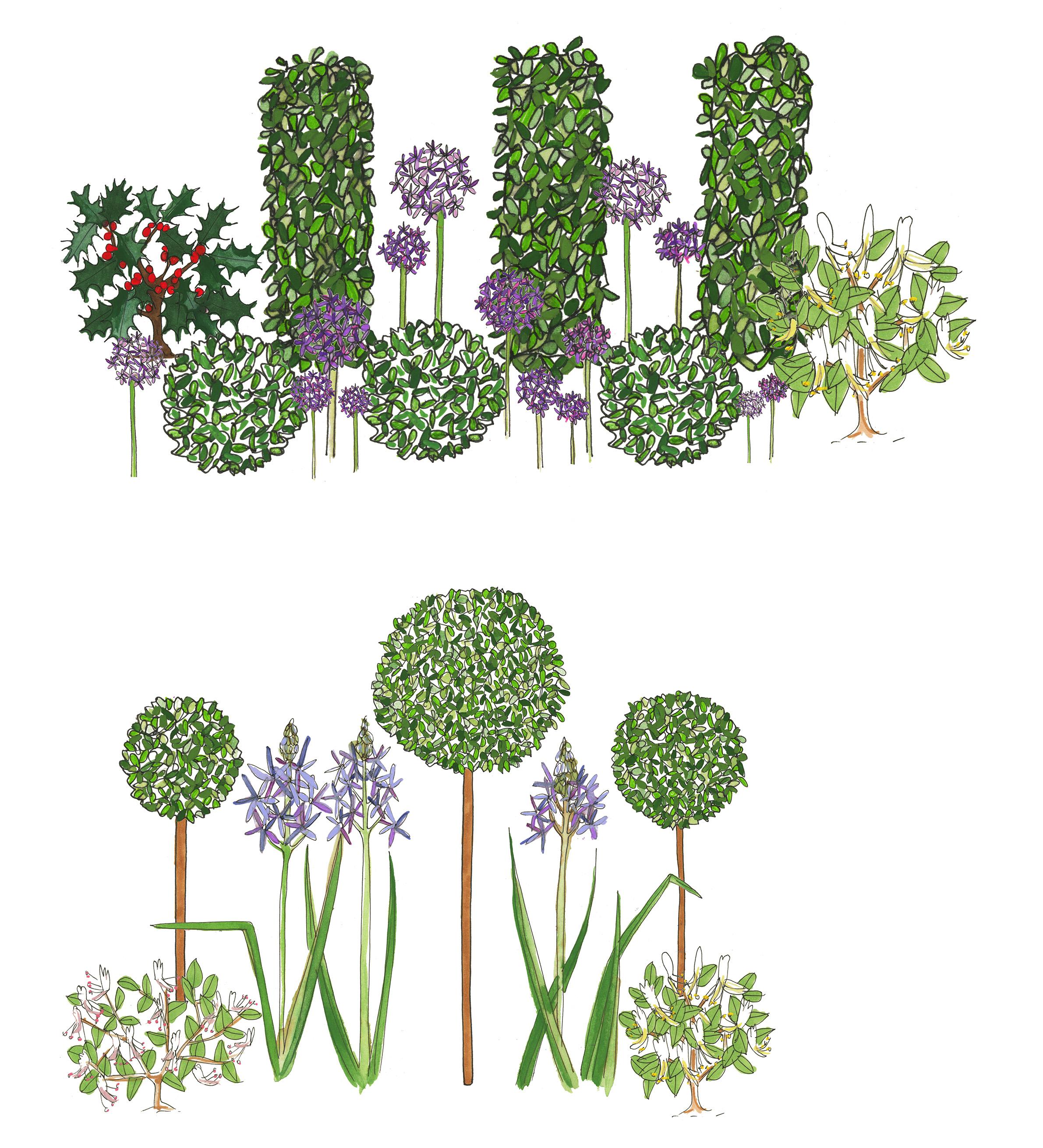 7. Formal Garden - sketch of border FIN2.jpg