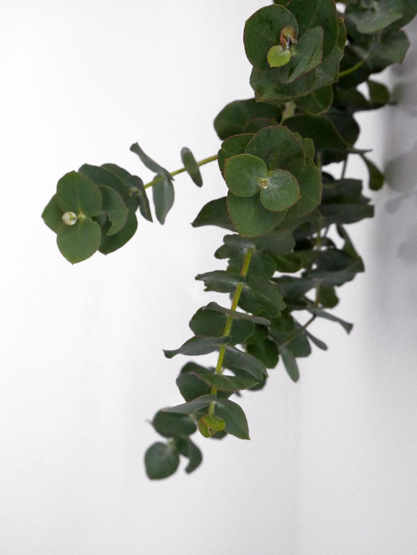 Hang eucalyptus in shower