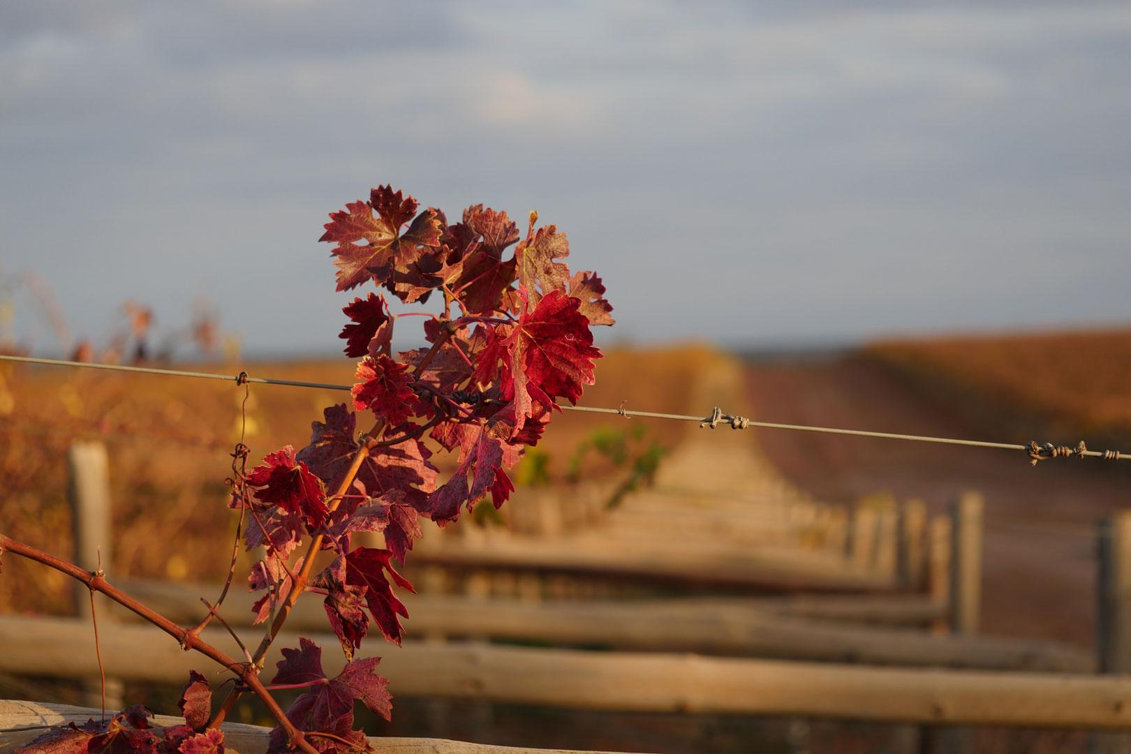 autumn-winter-vines-3.jpg