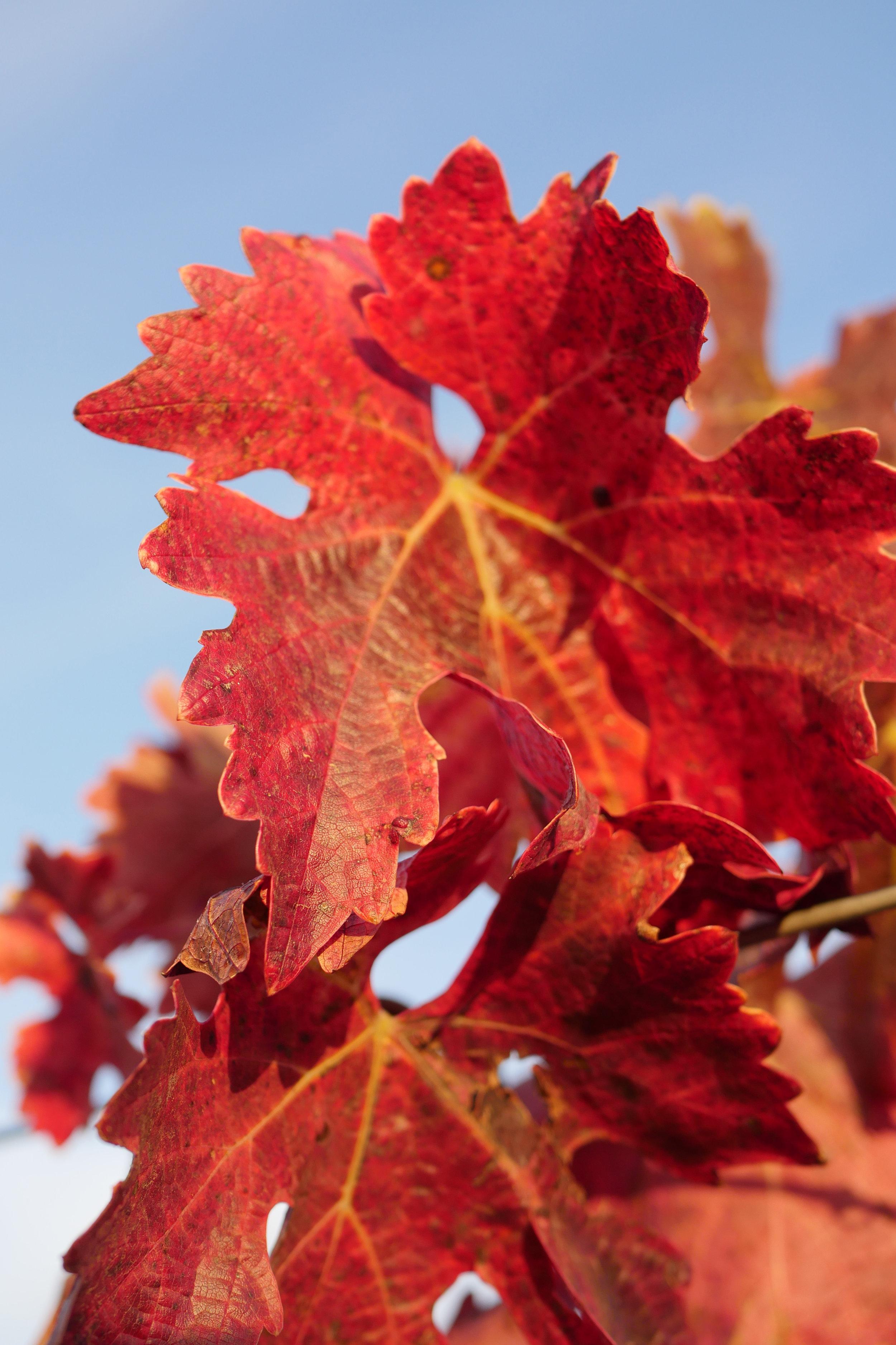 autumn red.jpg
