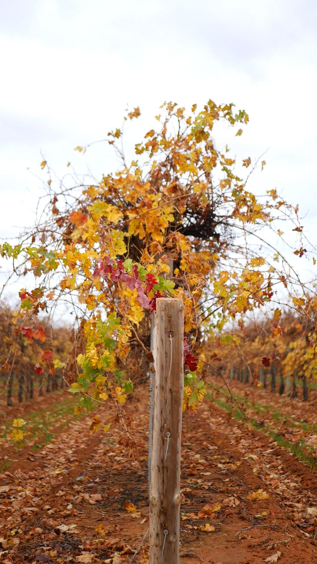autumn-winter-vines-9.jpg