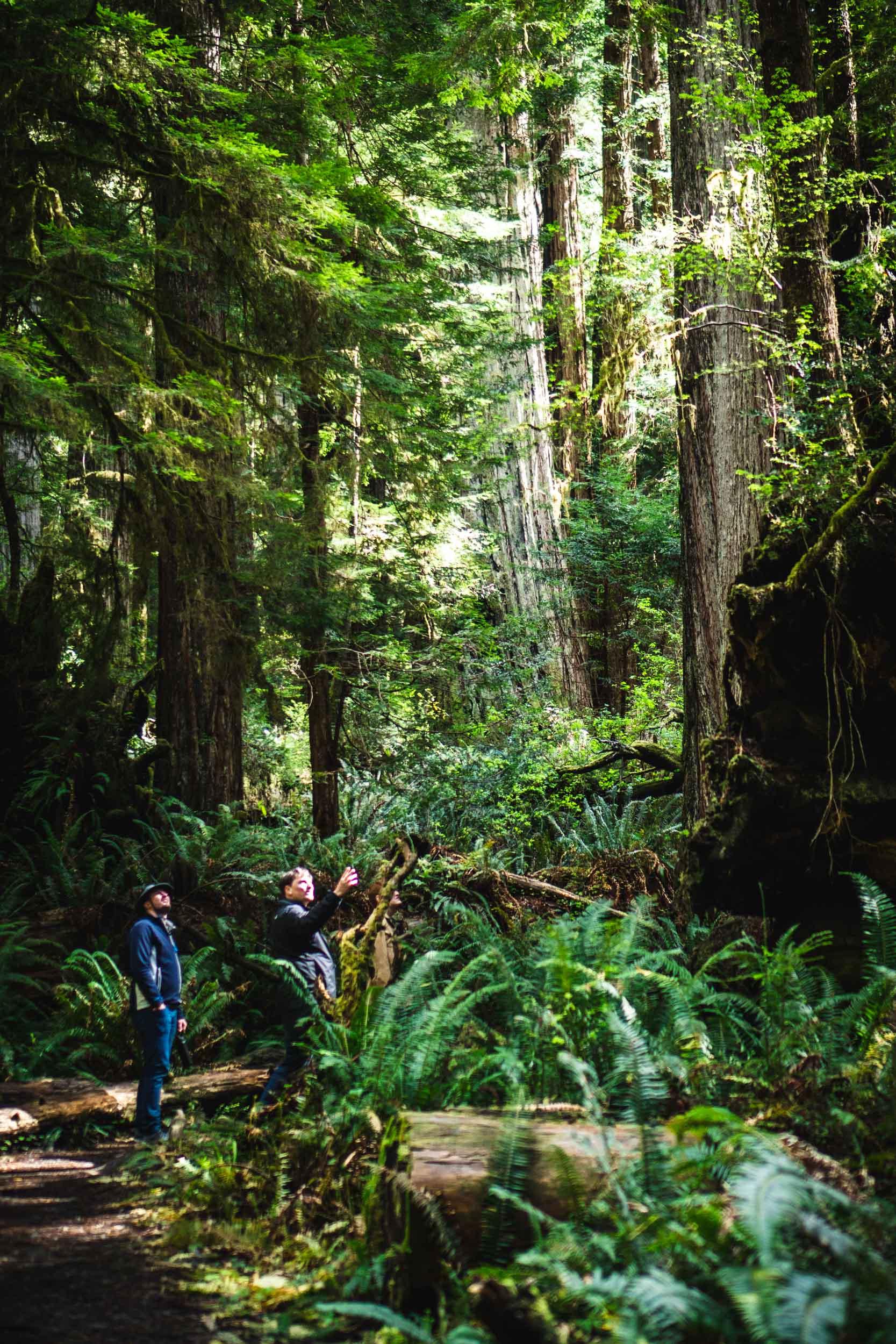 redwoods-trip.jpg