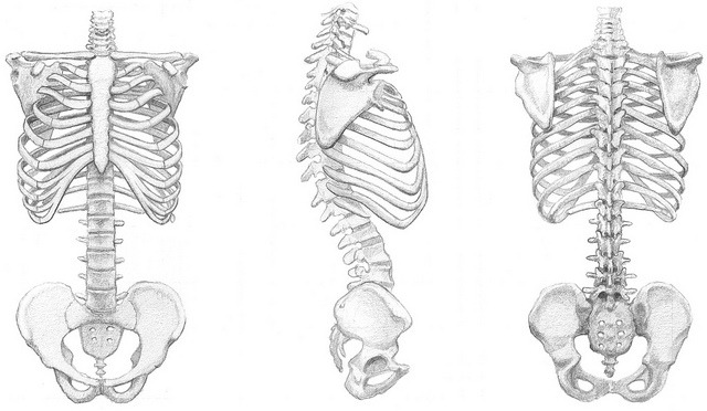More homework. If I never draw a ribcage again it'll be too soon.   Plus there's  this .