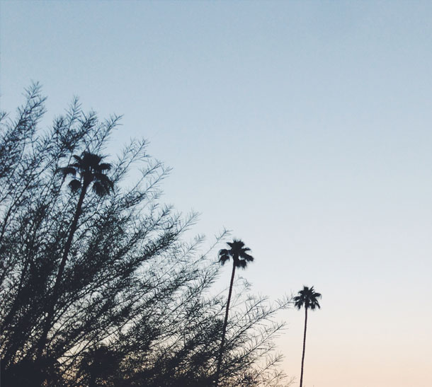 Ace Hotel + Pool Club | Palm Springs | Bourbon and Goose