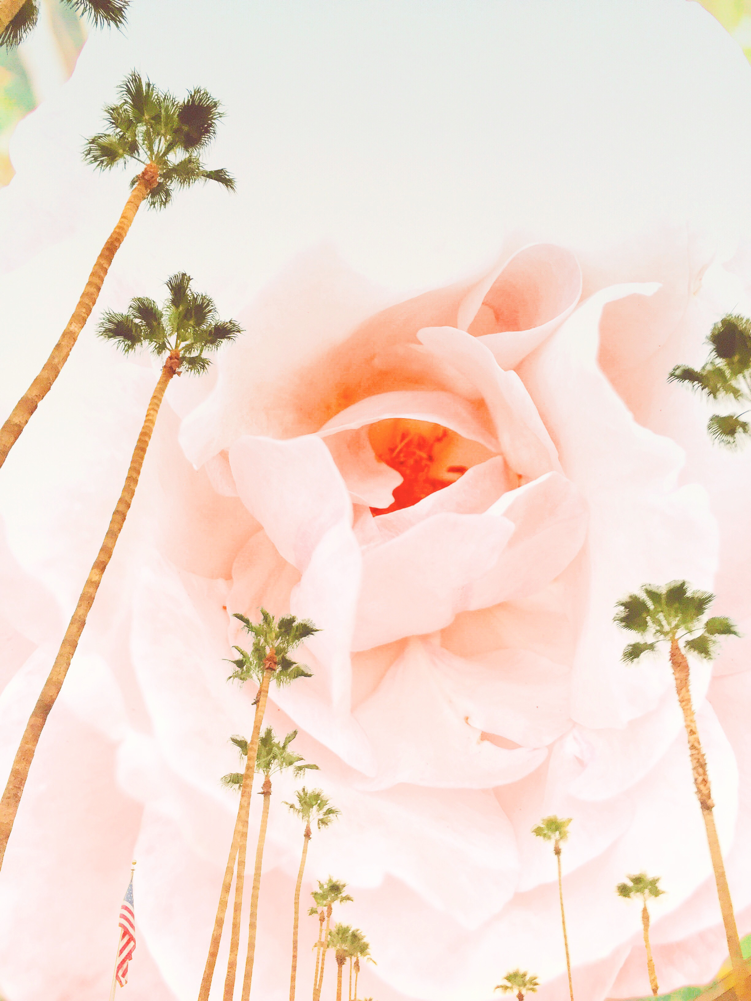 Palm Springs and the Pink Rose / collage art by Marissa Berrini