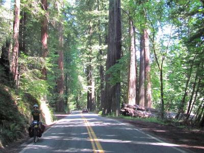 Matt cruises through the redwoods