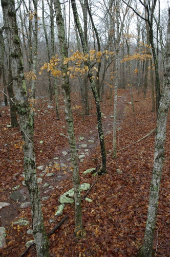 A great section of the Ozark Trail