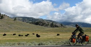 Tommy bikes by a herd of bison in Yellowstone National Park.