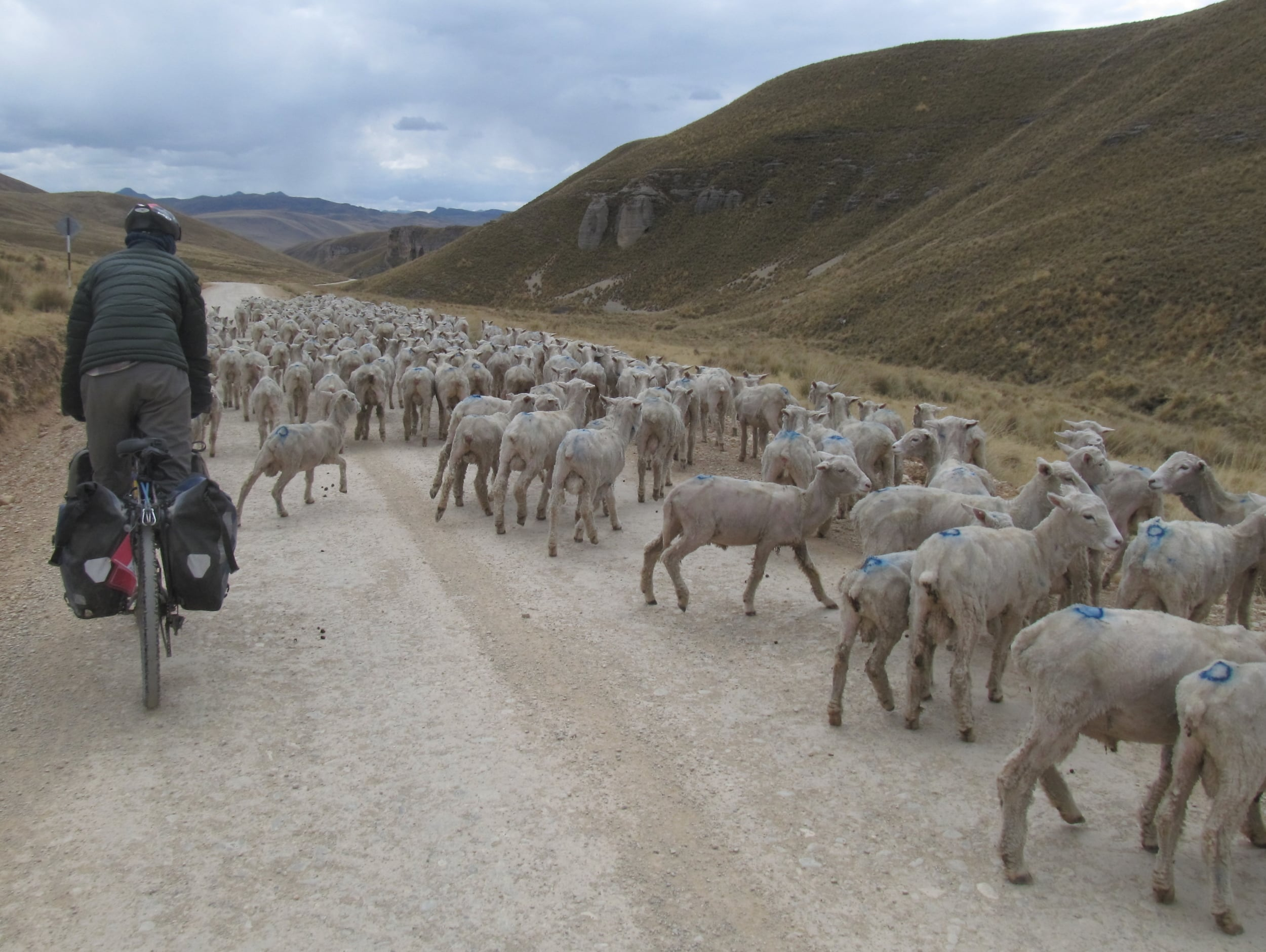 Sheep are one of the few things we are faster than.