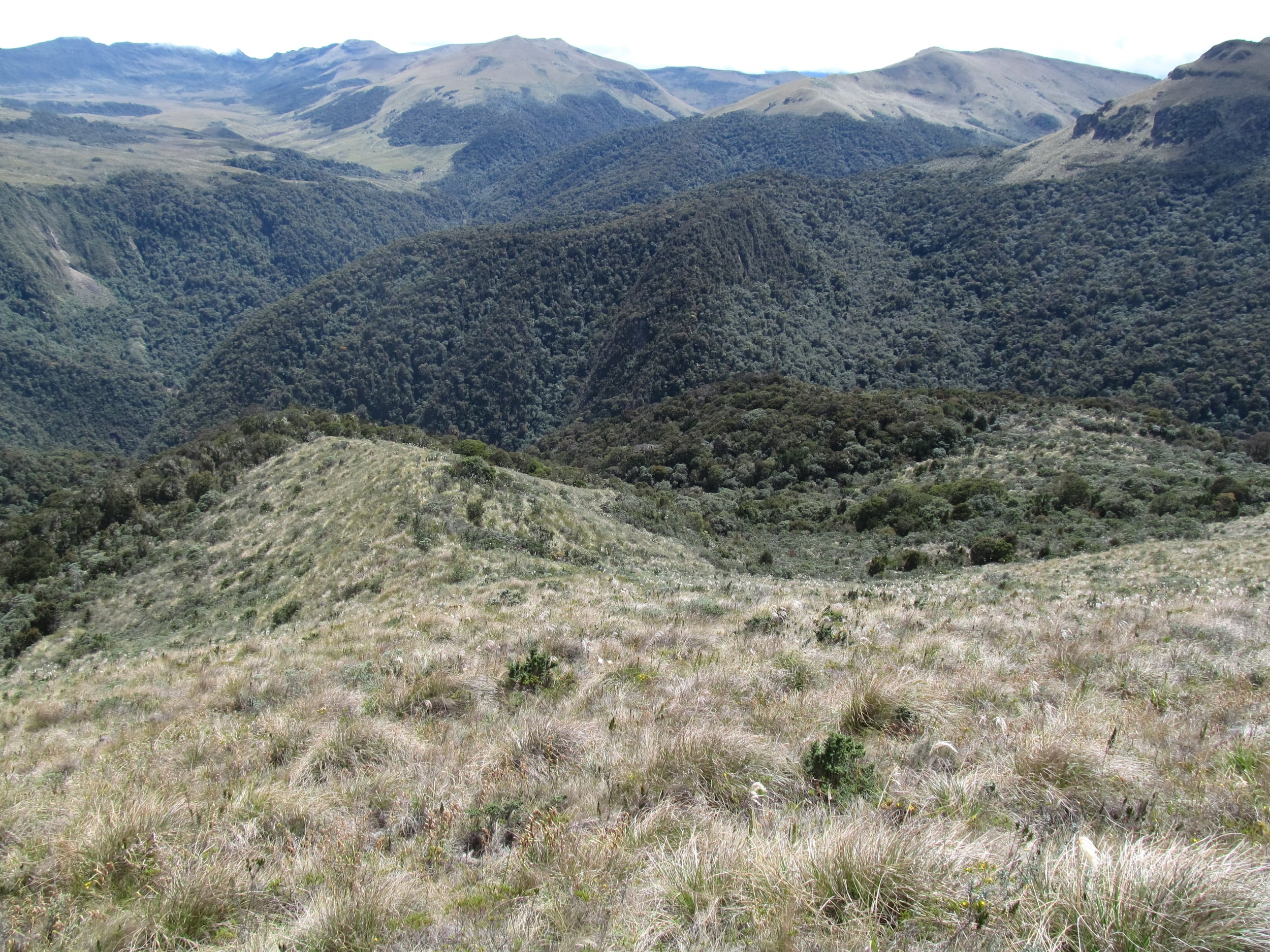 Above the forest lies the Paramo, it is a great place for seeing bears and wonderful views.