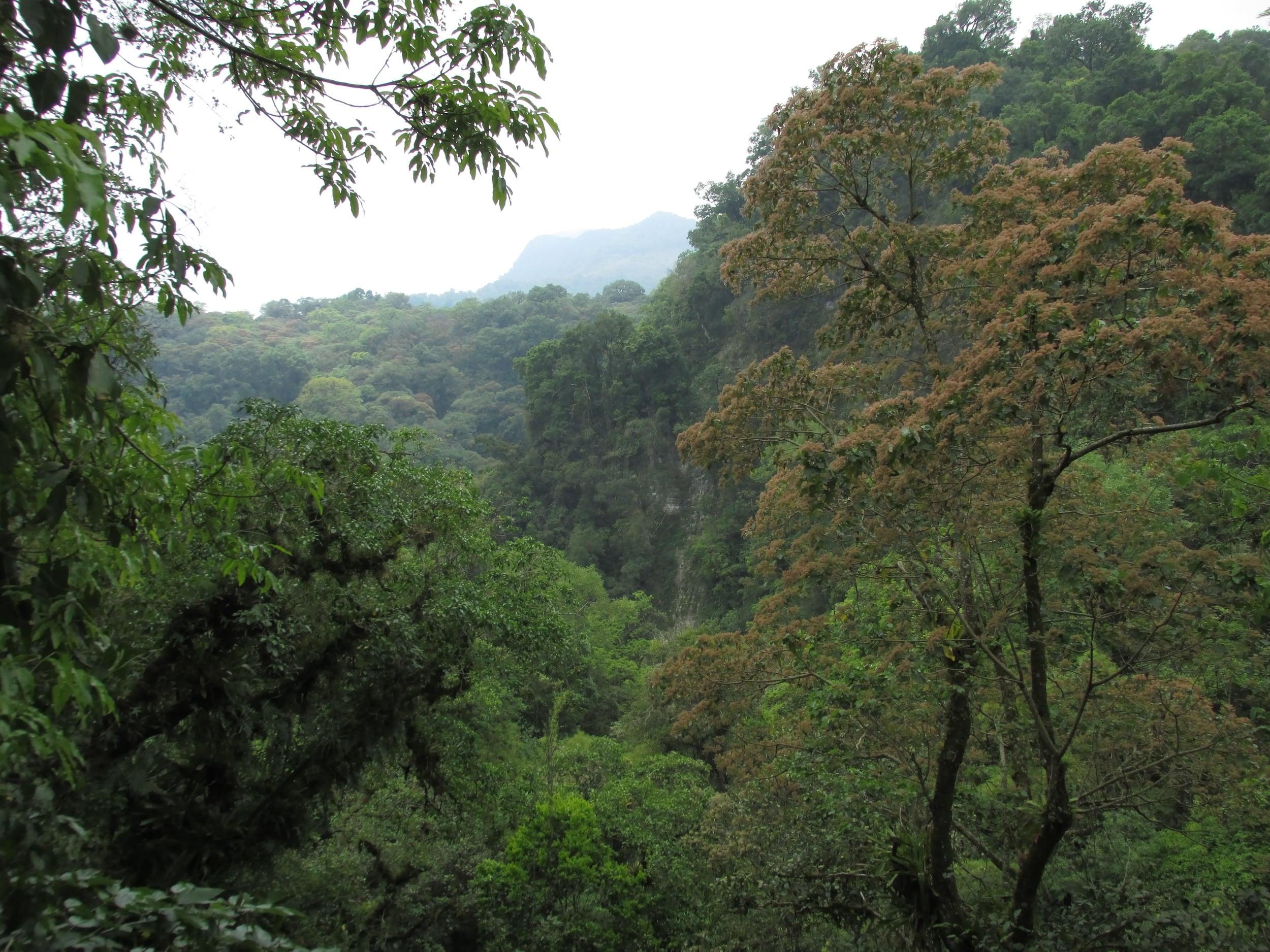 The rainforested hills around Xilitla were Edwards' eden.
