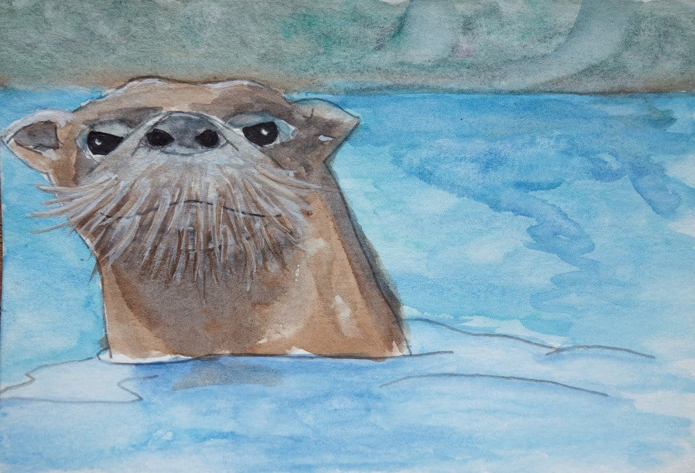 An otter watches me and I watch him.