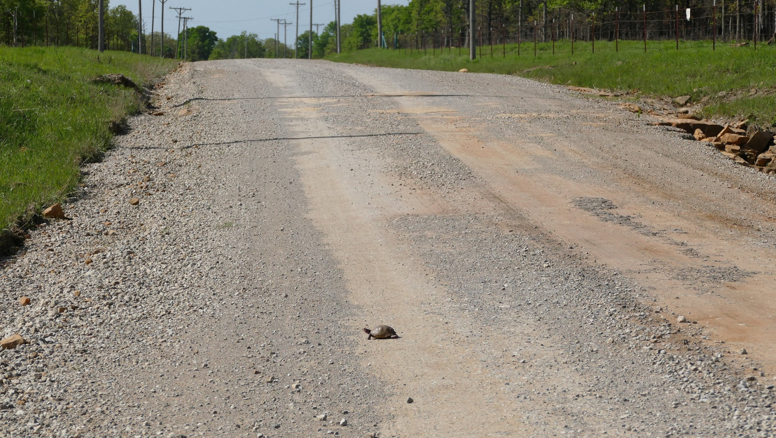 I am always so happy when I see live critters crossing the road. I always wait to make sure they cross safely, or move them if waiting is not an option.