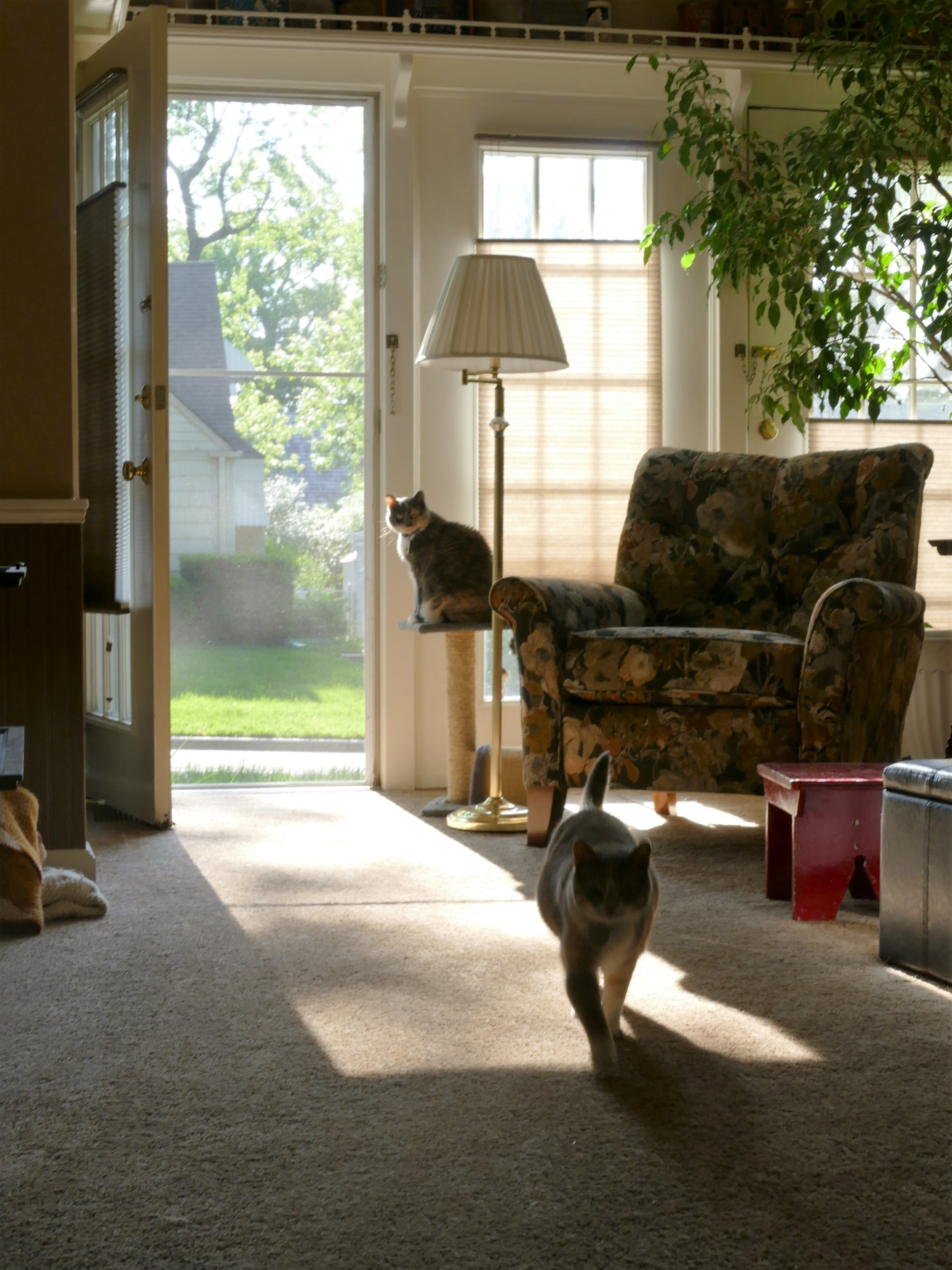 Look mom, the cats are alive, well, and enjoying the fresh air and sunshine.