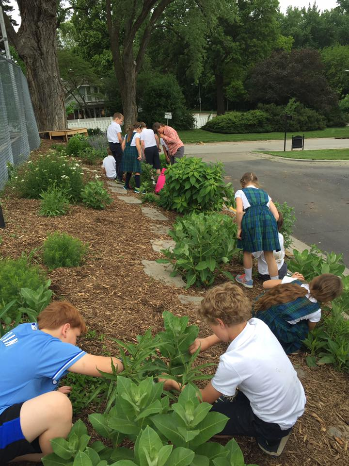 We found lots of milkweed, a few monarch eggs, and a monarch adult.