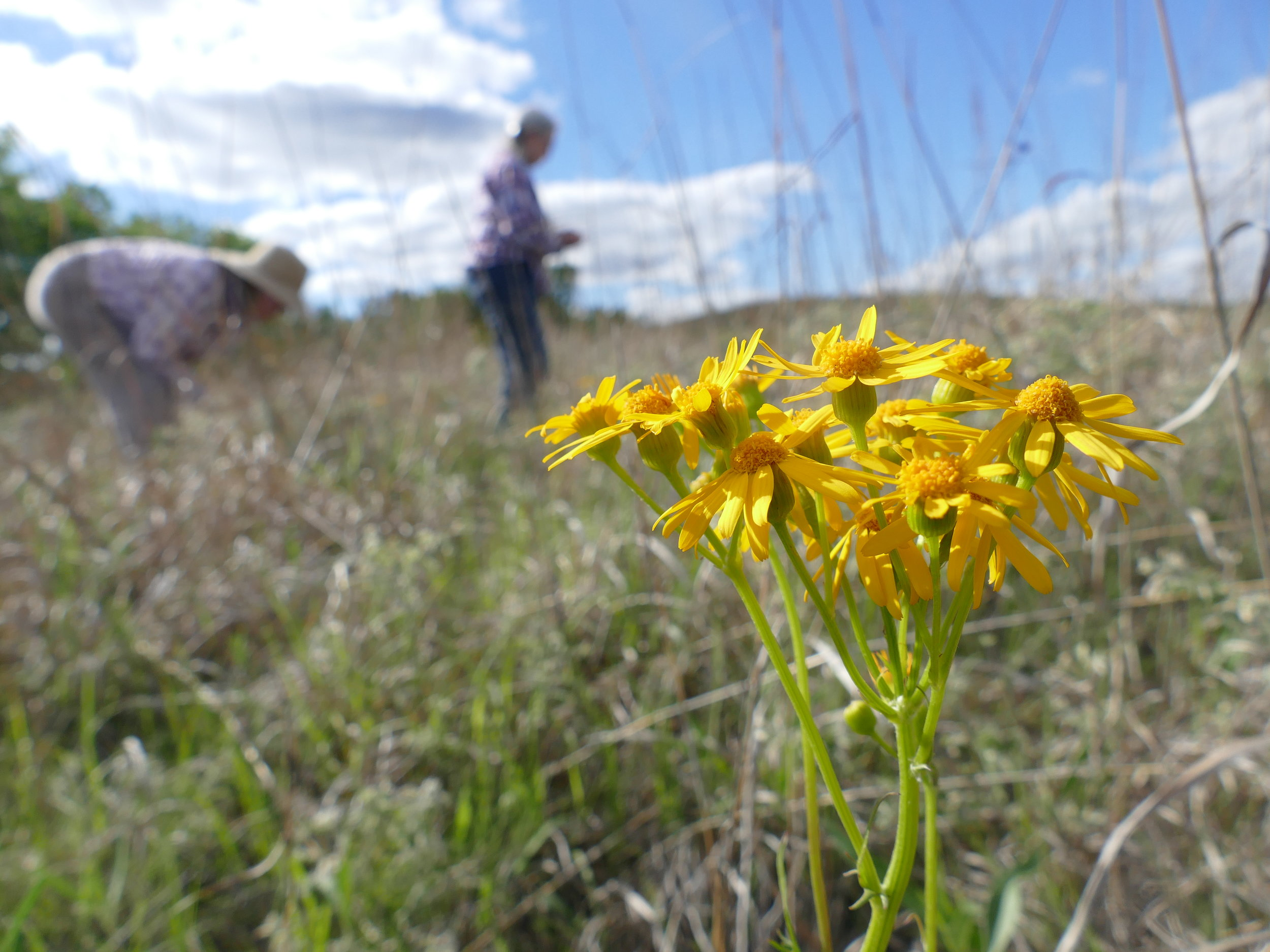 In Sioux City, I was given a tour of the city's prairie, their bike path, and a few points of interest. What was most inspiring was meeting the folks giving the tours, who work tiredlessly to leave the planet healthier for those to come.