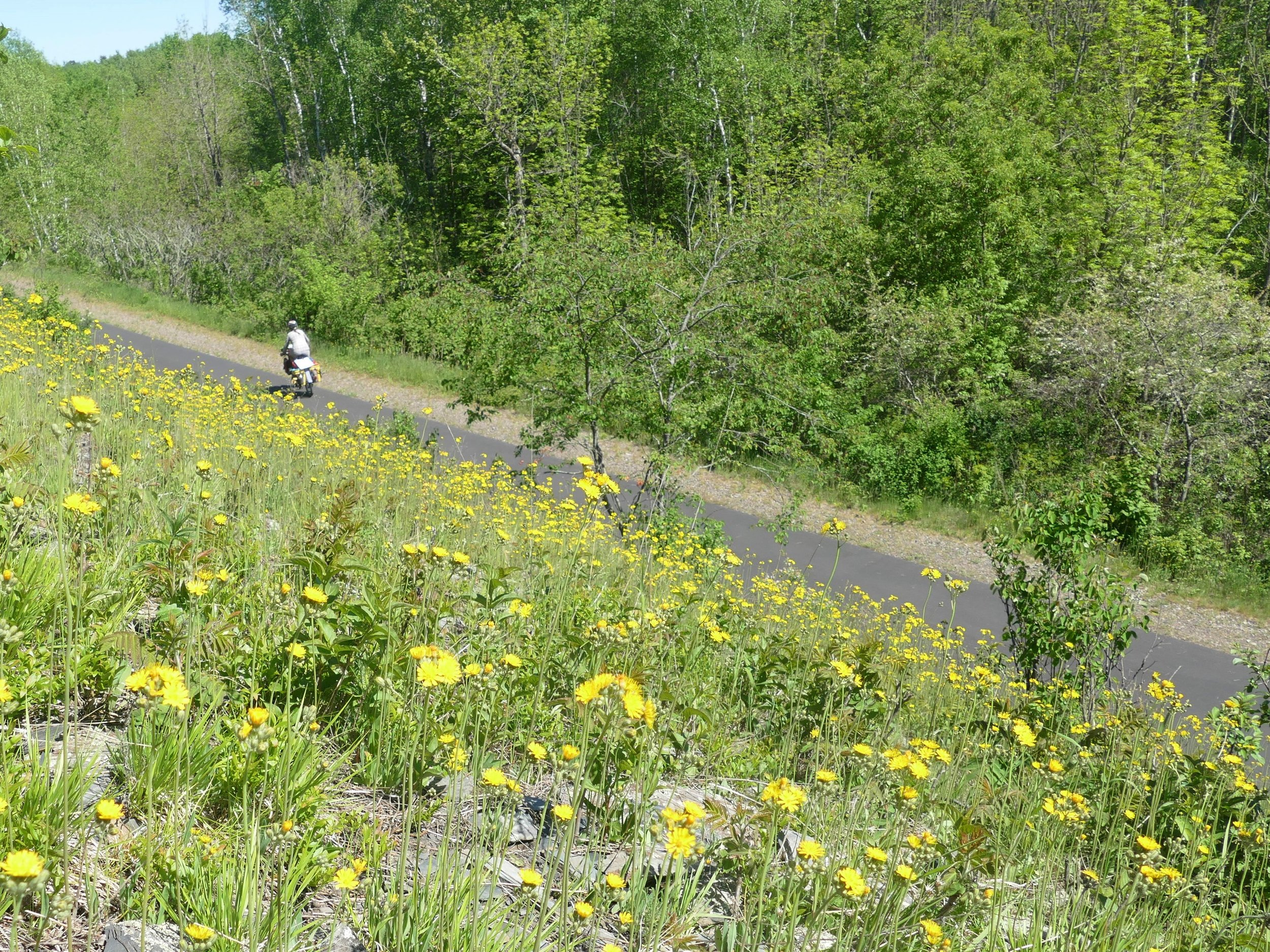 The prairies, boreal forests, and hardwood forests collide, creating an interesting bike ride full of wildlife.