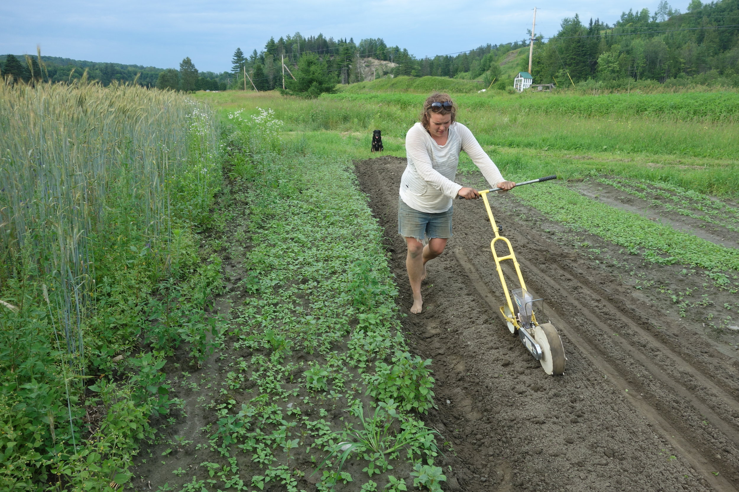 This could be the future of farming: small farmers growing our food and taking care of our planet.