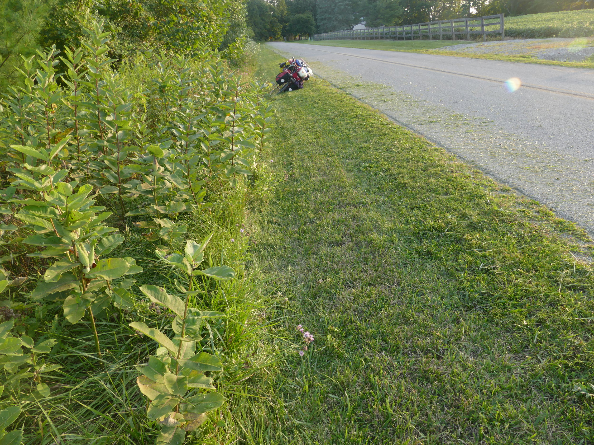Mowing the ditches means many caterpillars, eggs, and chrysalids won't survive.