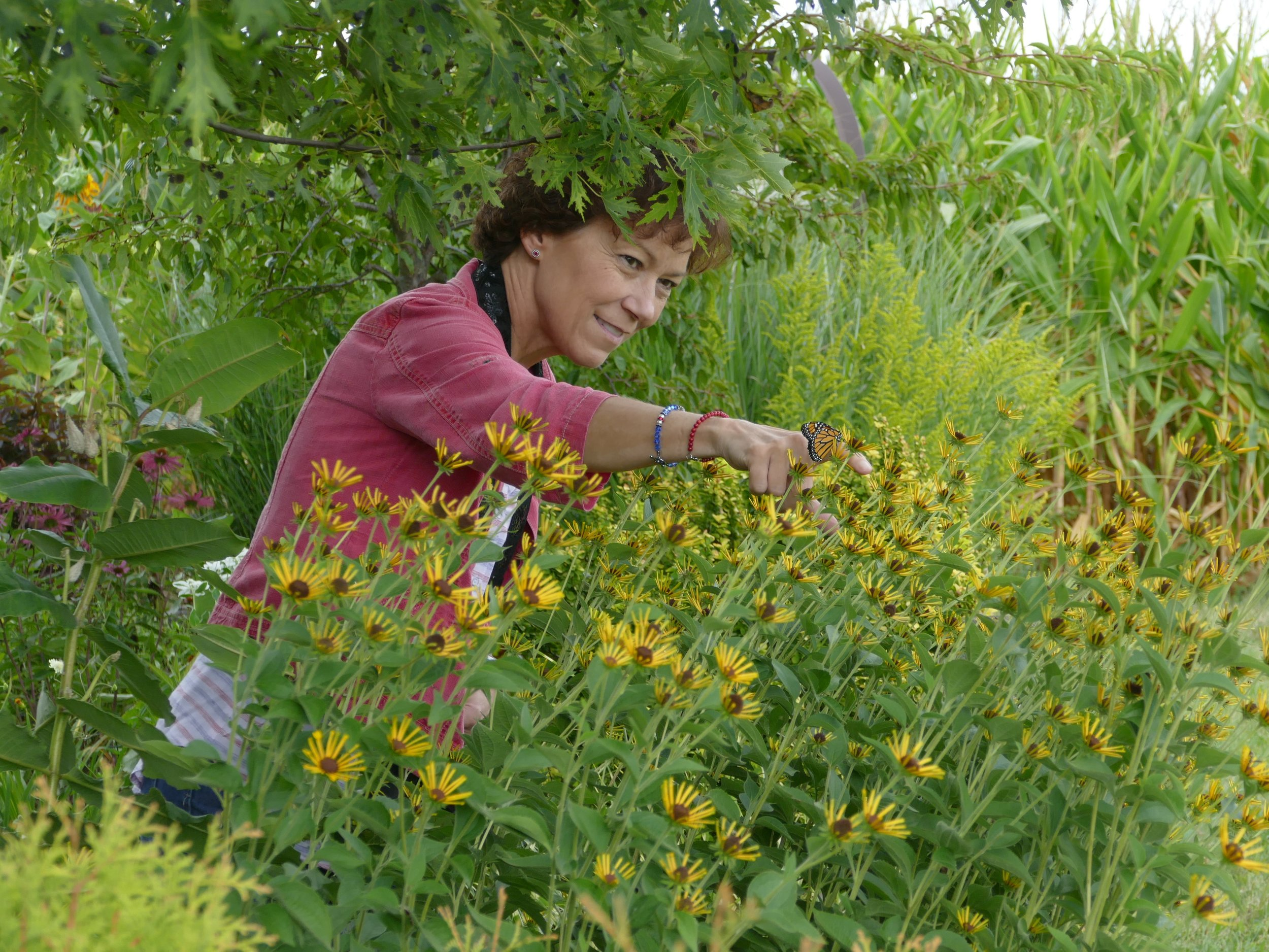 Kylee is a voice for the monarch, and her garden is a buffet for monarchs.