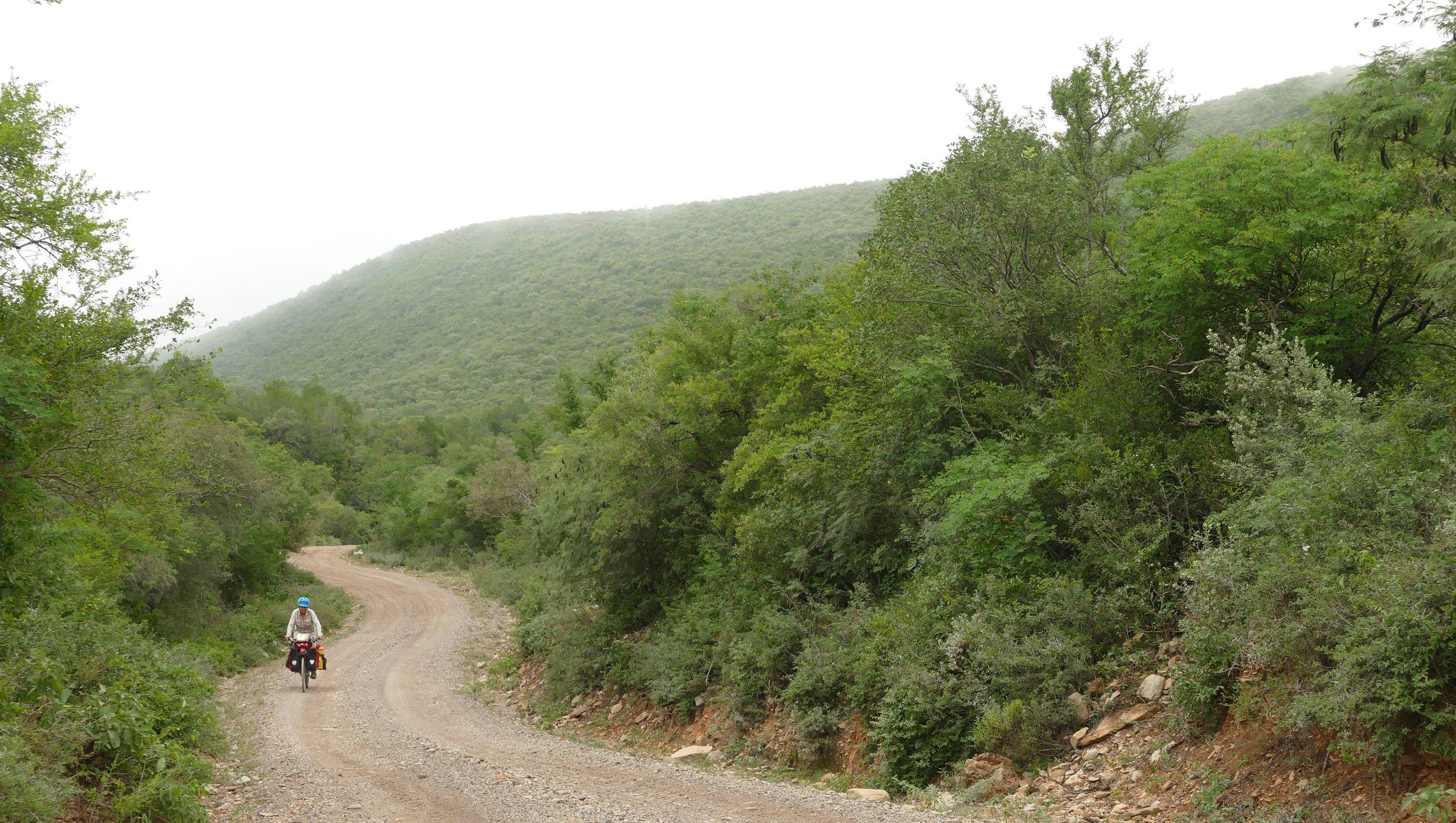 winding road sara.JPG