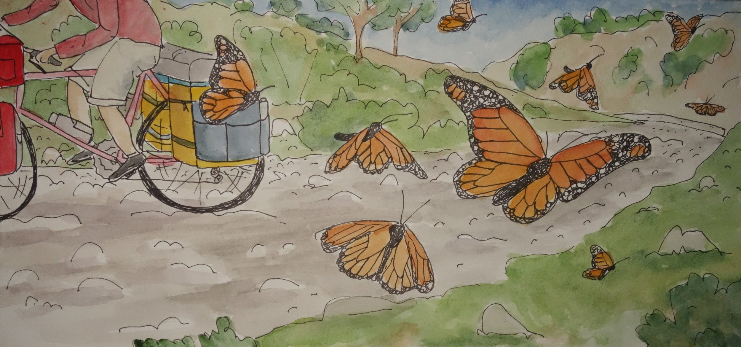 E. I rode between the sanctuaries, interrupting the monarchs drinking from puddles and preparing to fly north. ,