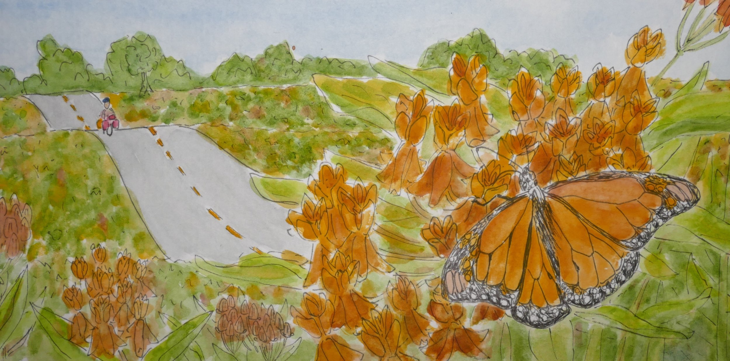 EE. Pedaling south I began to see signs of fall. Butterfly milkweed flashed like hazard lights sparse but strong in fall's browning fields.
