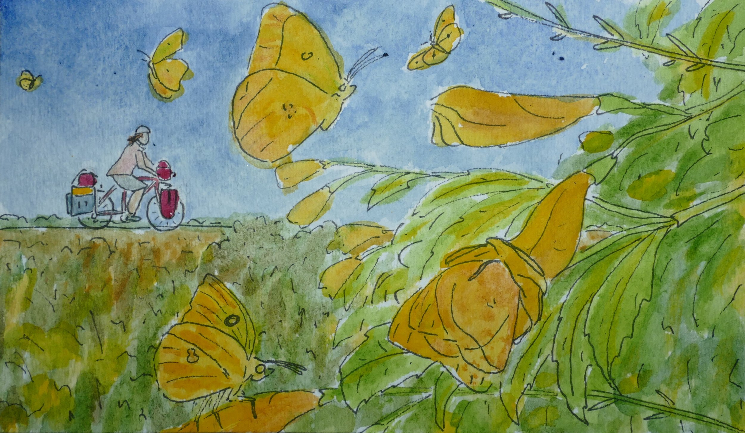 LL. Crossing into Mexico I was accompanied by a pilgrimage of yellow sulphur butterflies. Never had I seen so many before.
