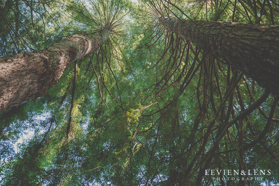 trees 365 Project - January {Auckland-Hamilton lifestyle family-wedding-couples photographer}