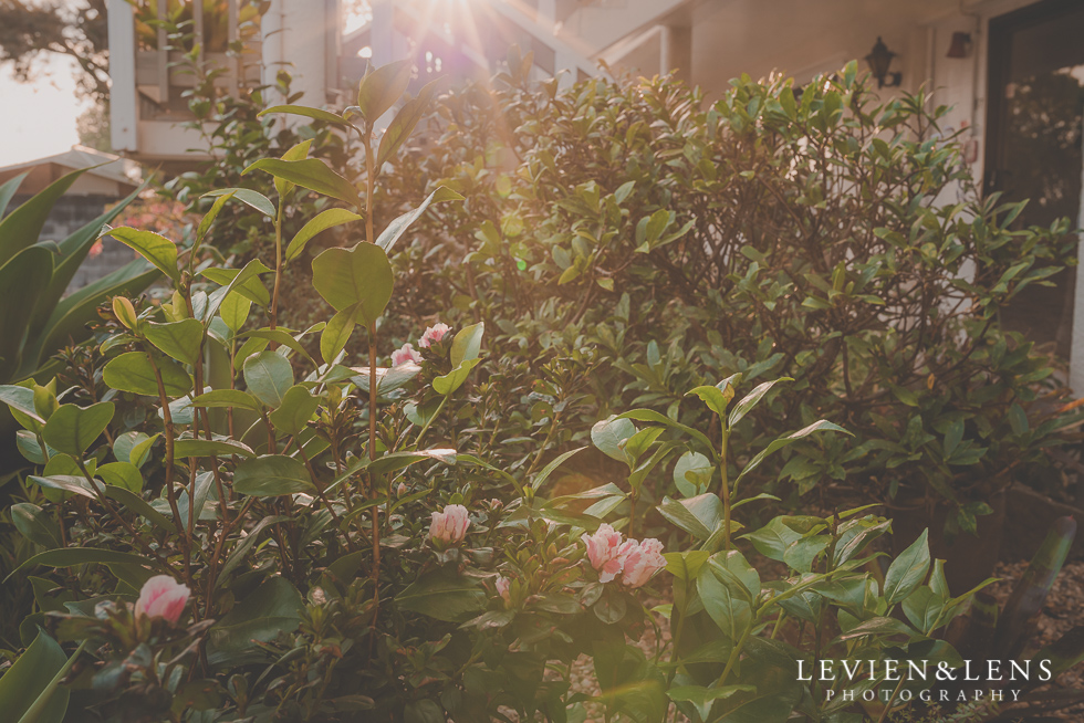 beautiful light {Auckland-Hamilton-Tauranga wedding photographer}