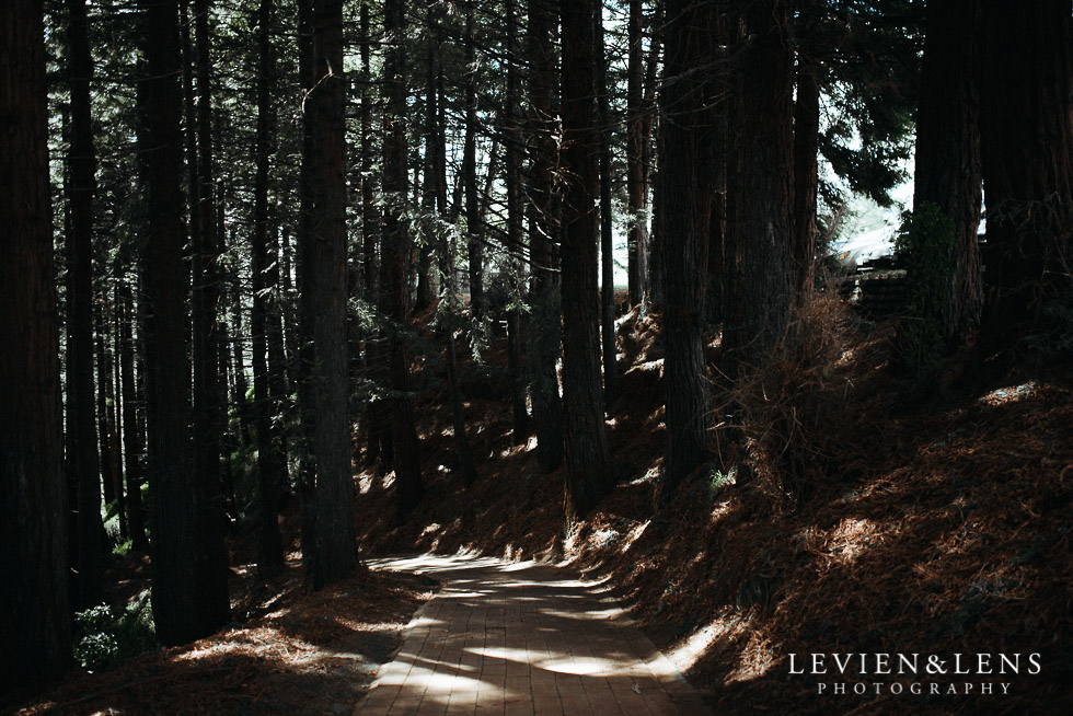 forest - dappled light - August {Hamilton-Taupo lifestyle wedding photographer}
