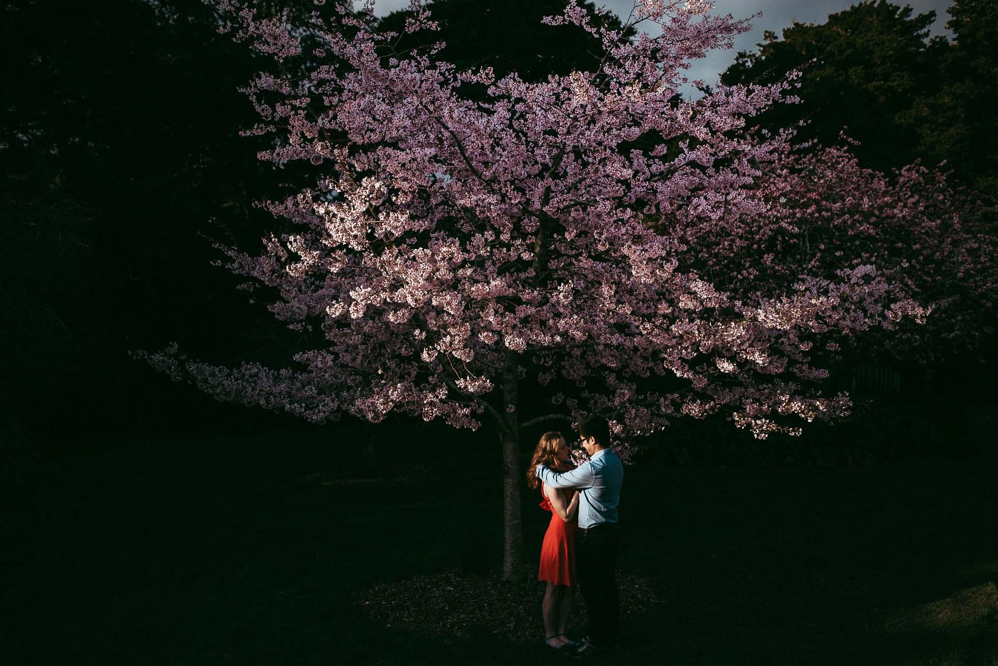 Auckland Botanic Gardens Engagement Session - Spring Cherry Blossom {Waikato wedding photographer}