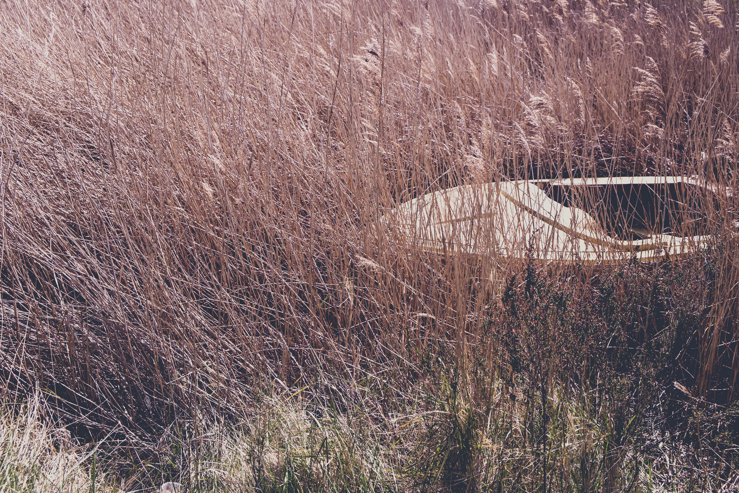 company shed-1730.jpg