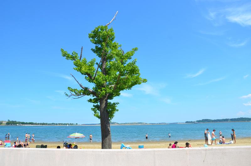 a summer day, carson beach