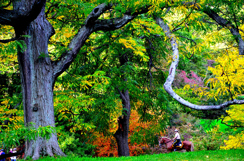 boston park rangers mounted unit,arboretum(sonya kovacic