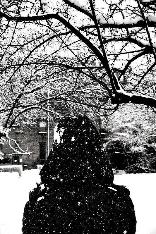 at the piano factory, post-snowfall  (sonya kovacic)