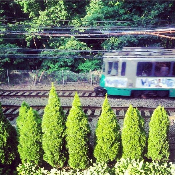 the d line  (sonya kovacic)