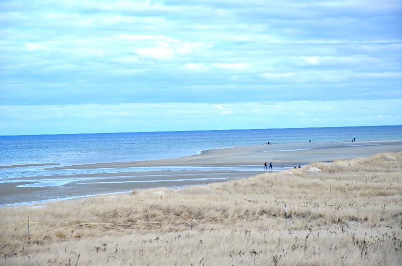 crane beach  (sonya kovacic)