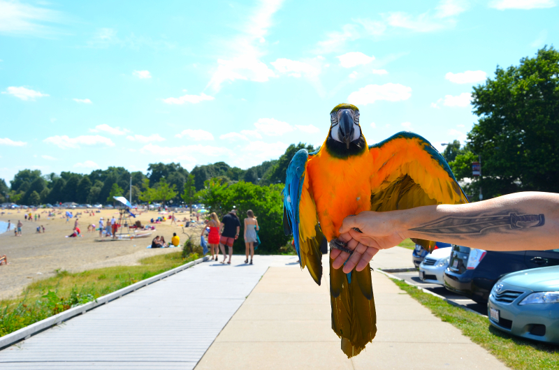 a parrot in southie (sonya kovacic)