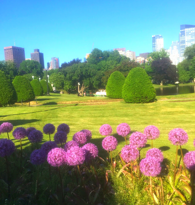 purple sensation, public garden