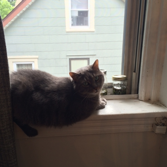 Clover is the guardian. She's also enjoying the breeze through the screen window.