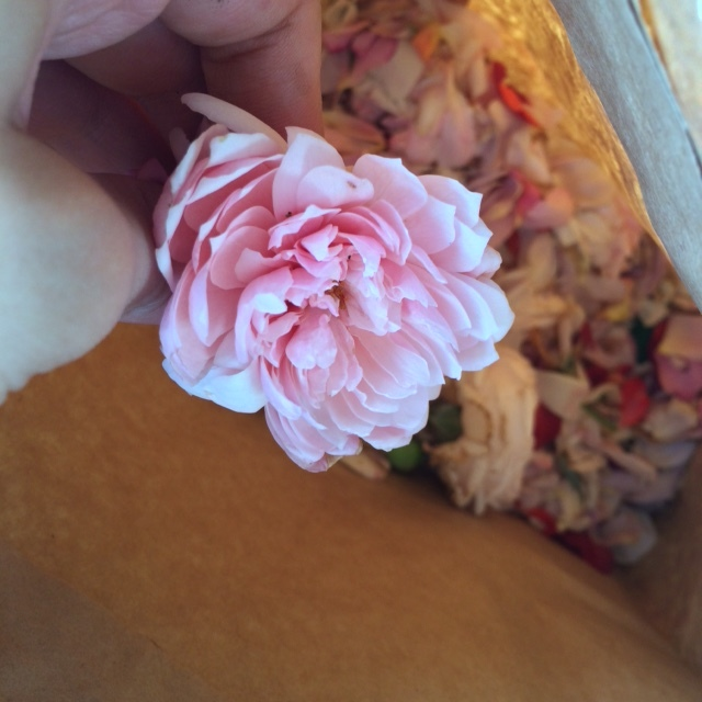 Several intact flower heads were in this bag of sweetness.
